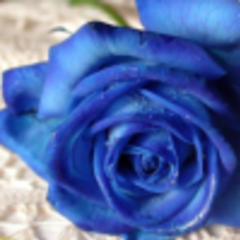 蓝色妖姬yy