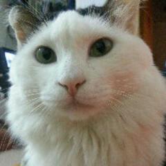 qingcat