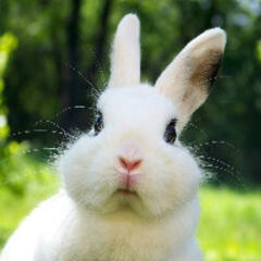 闪亮的兔子