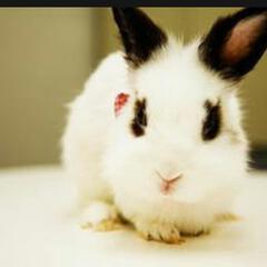 兔子熊猫眼儿