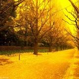 秋风落叶2011