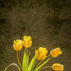 海棠ruby
