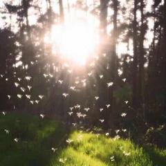 最美的太阳