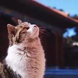 爱石头爱猫爱家人
