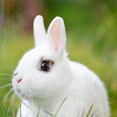 安静的兔子999
