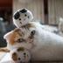 玩玩躲猫猫