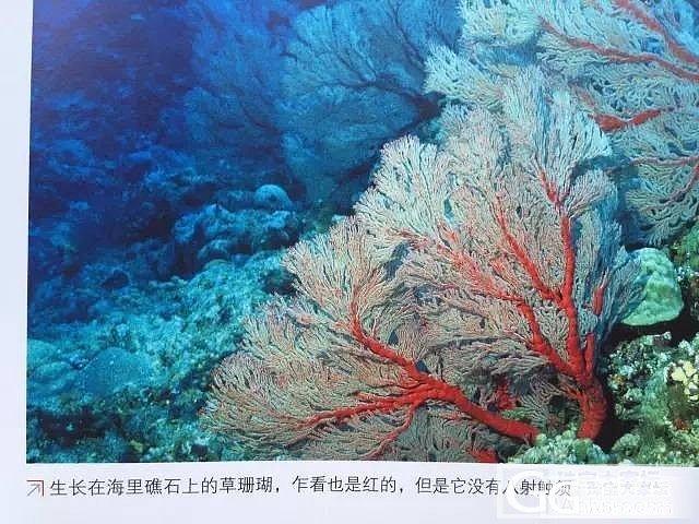 【红珊瑚进阶】草珊瑚也是珊瑚吗?_有机宝石
