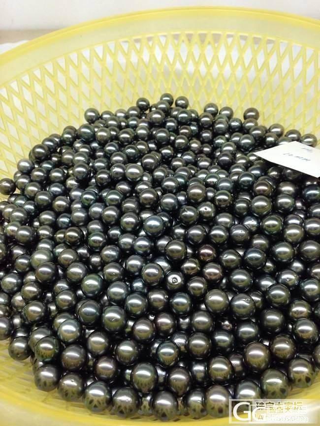 珍珠旺季来临,大量黑珍珠!_珠宝