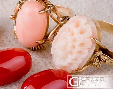 珊瑚戒指 一_珊瑚