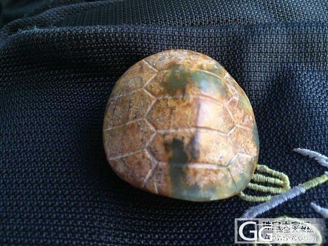 龟壳_龟甲