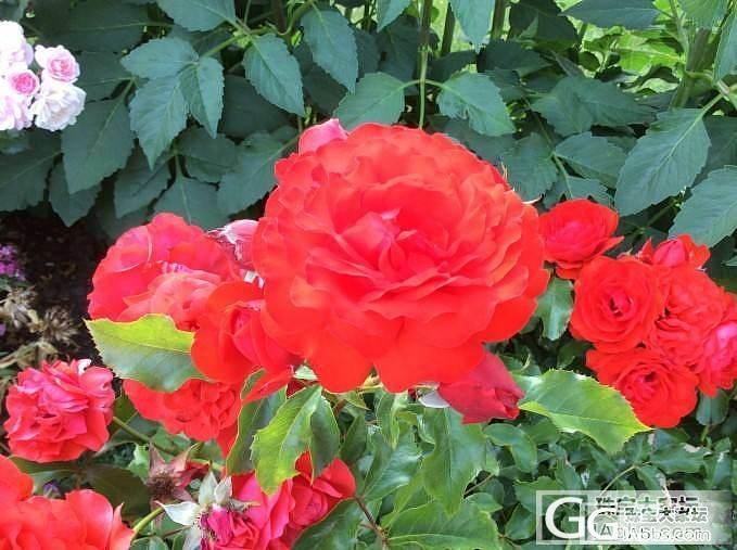 夏天拍的一些花花草草_观花植物摄影