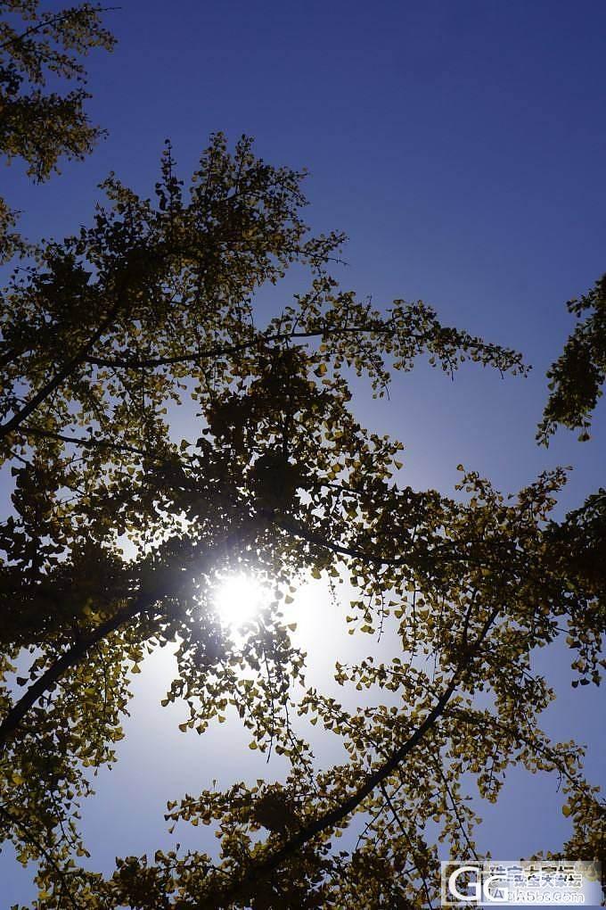 北京的秋_北京木本植物摄影
