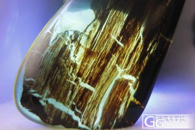 缅甸树皮或者树叶植物珀,1亿年前白垩纪远古的脉搏_琥珀