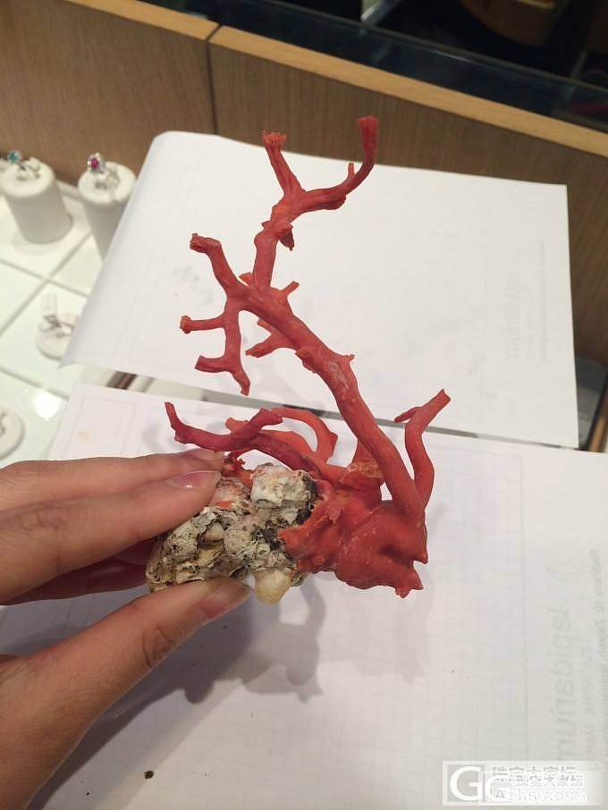 小型沙丁珊瑚树摆件(未抛光半成品)_珠宝
