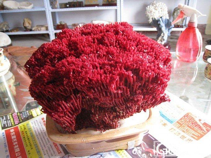 世情贵耳不贵奇,谩说海底珊瑚枝