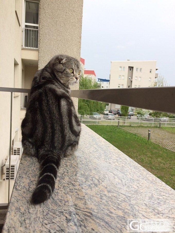 我也来晒一下我家喵星人~_摄影猫