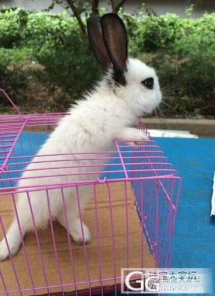 上新图啦!在25楼。小兔子在舔脚吃 ..._宠物