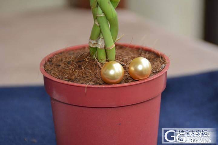 新入手的金珠,博个眼球,看着喜欢的给个闪闪哦_有机宝石