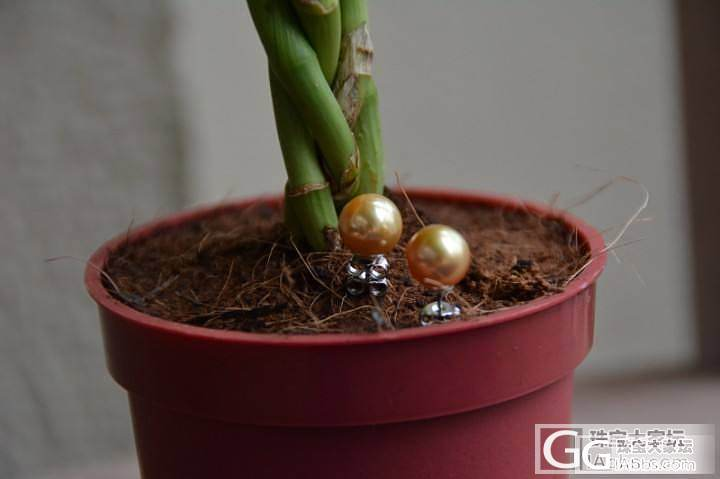 新入手的金珠,博个眼球,看着喜欢的给..._有机宝石