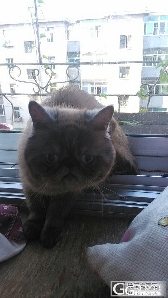 怎么才能让猫不掉毛呢?_宠物
