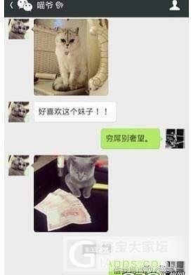 当喵星人会发微信。。。。_大家谈猫贴图闲聊