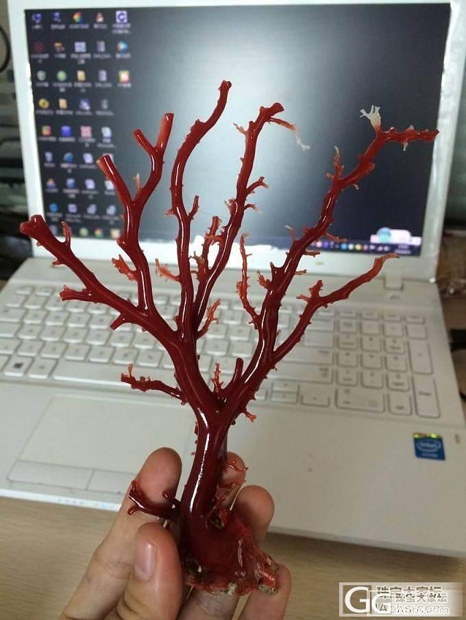 天然红珊瑚厂家直销一手货源_有机宝石