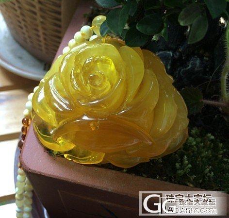 给点阳光就灿烂,一朵美貌的蜜糖大玫瑰_琥珀