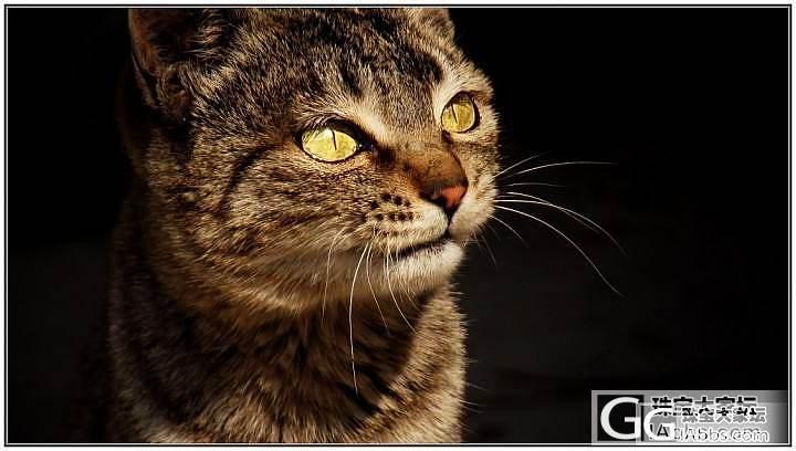 过年回去老家拍的_猫摄影