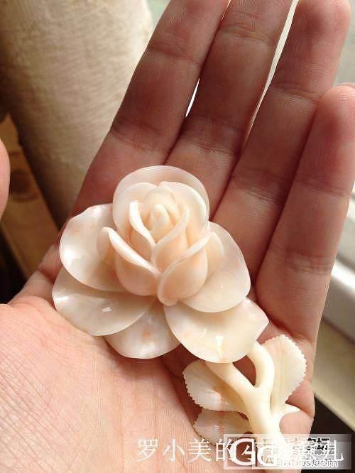 [罗小美的大仓]我的那些花儿_有机宝石