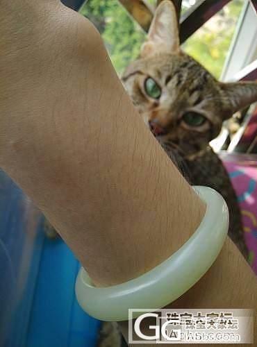 堪比美娇娘的猫先森~~泥嚎~~_宠物