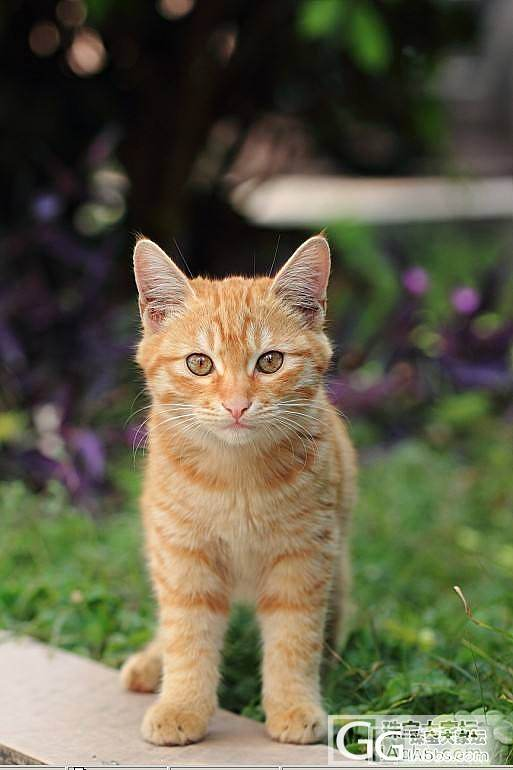 阳光好,晒萌猫(流浪小精灵第二季)_猫宠物