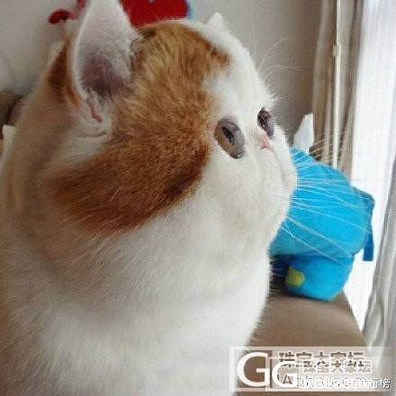 都说拍照侧脸显瘦......_猫贴图闲聊