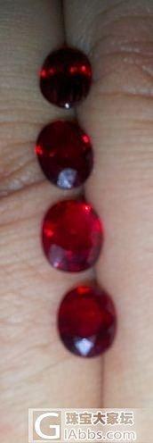 我的小鹌鹑_红宝石
