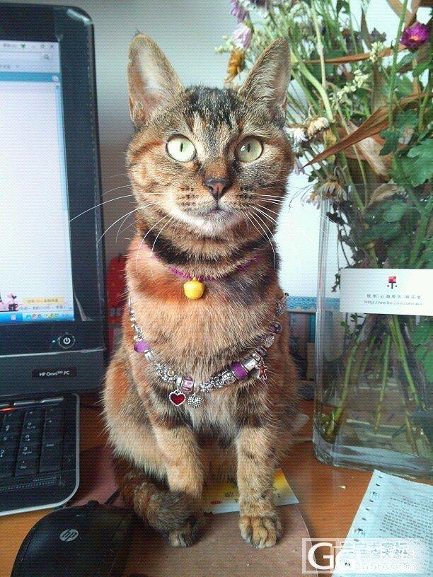 pandora小潘又壮壮了,感谢mi..._手链猫银