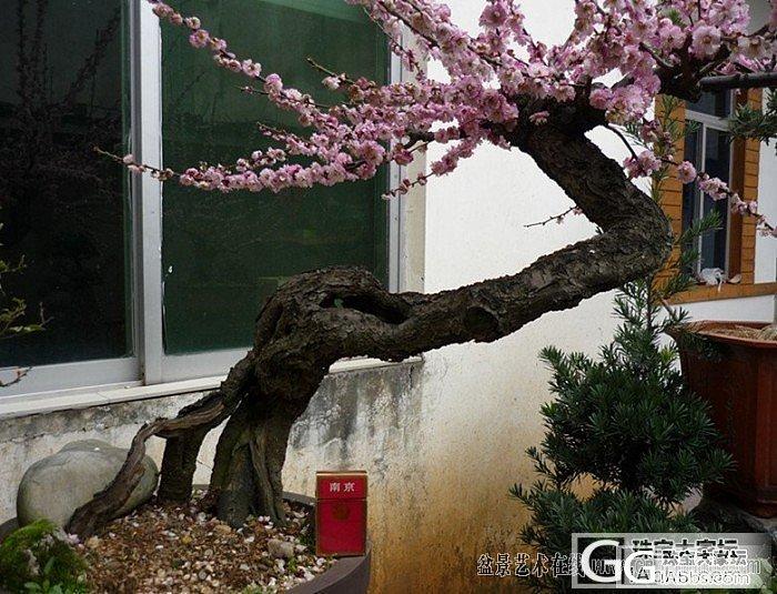 寿山石雕之----窗外寒梅(幽谷原创..._牌子寿山石印石