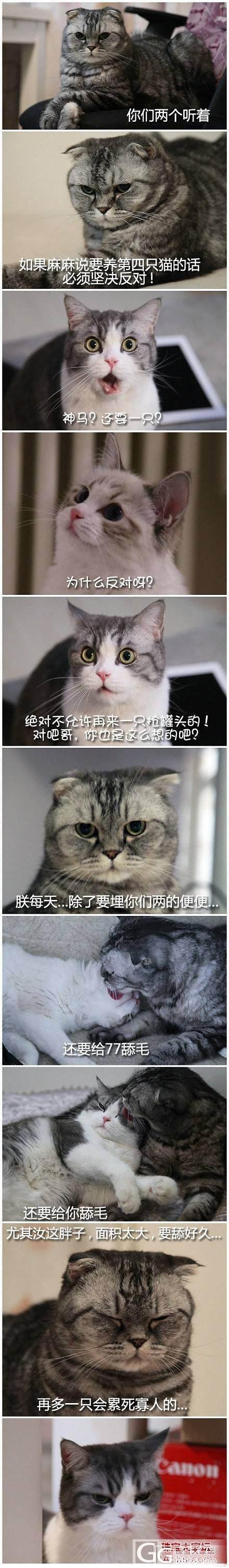 家里不能养第四只猫的理由 好欢乐_闲聊