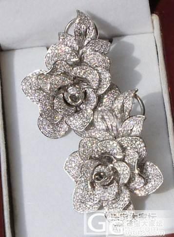 欢迎来到钻石动物园--我最珍爱的花朵..._钻石