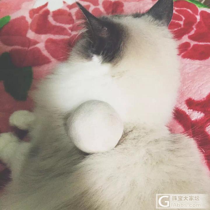 冬天到了 又到了炼丹的季节_猫