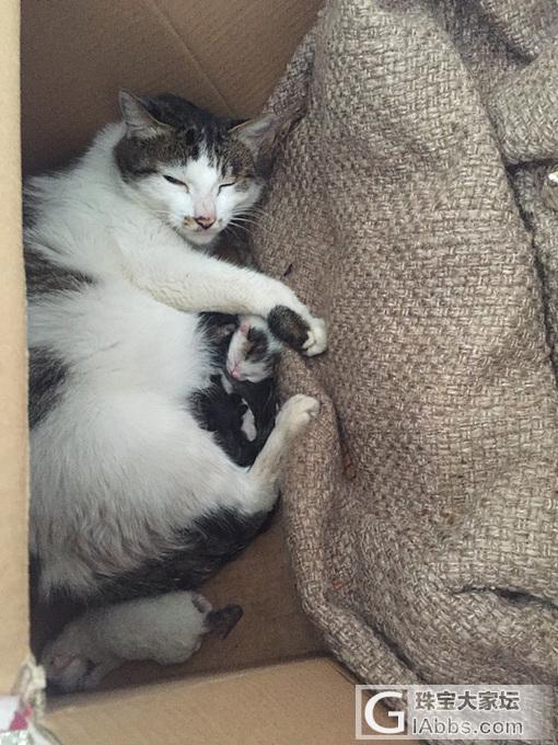 喵的诞生_猫