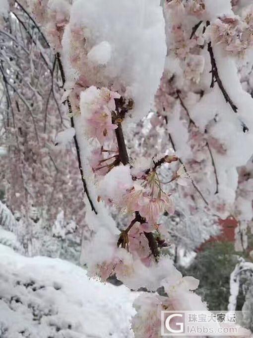 大十堰下雪了 3月桃花雪_闲聊十堰