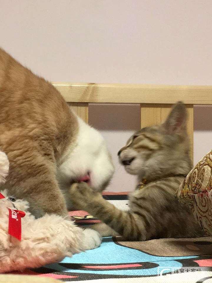晚安_闲聊猫宠物