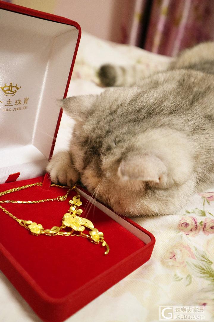 双十一就只买了这一件_金项链猫