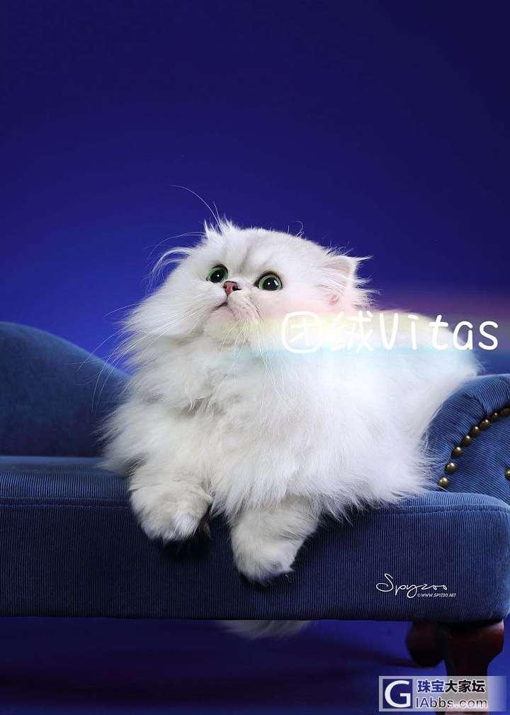 你可以一直美下去_猫