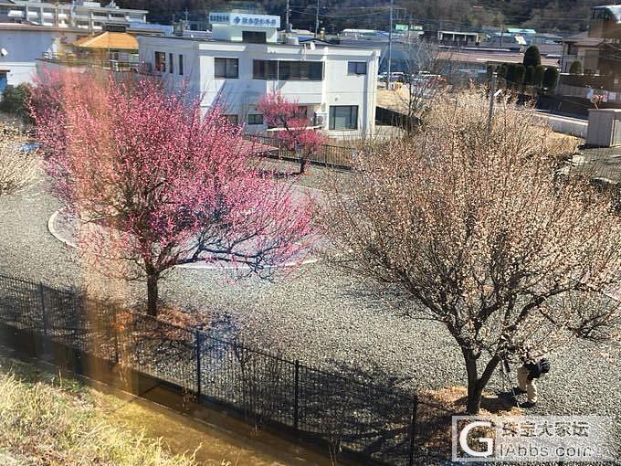 浪漫的樱花季_景色日本旅游