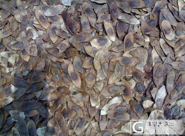 阿旺带你玩花梨(三)——海黄是如何炼成的_海南黄花梨