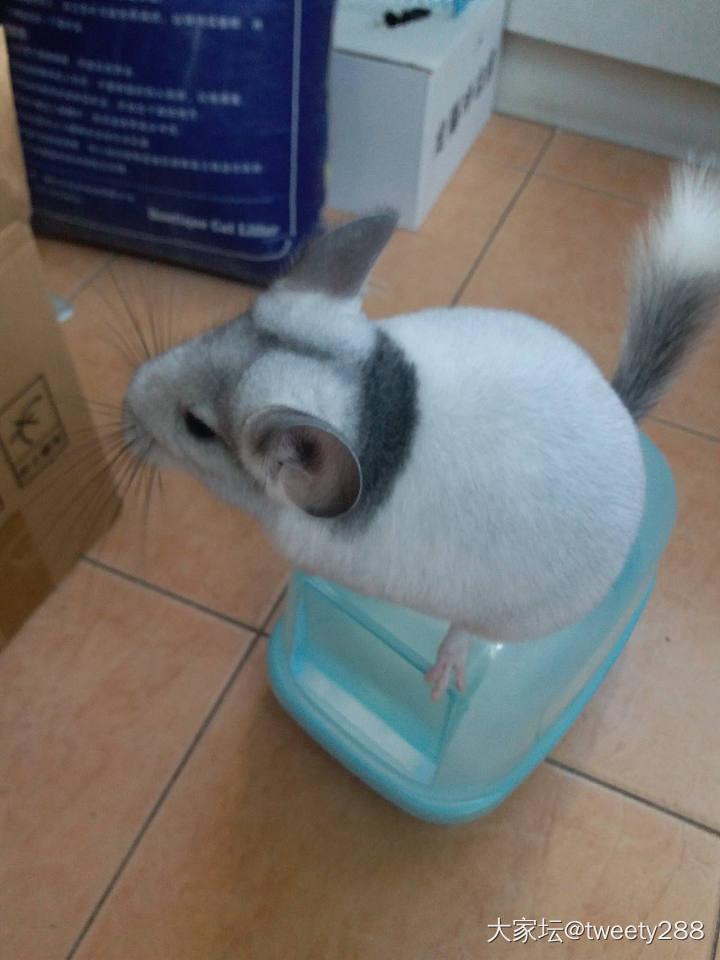 看到它的背影就想给它挂到包上_龙猫