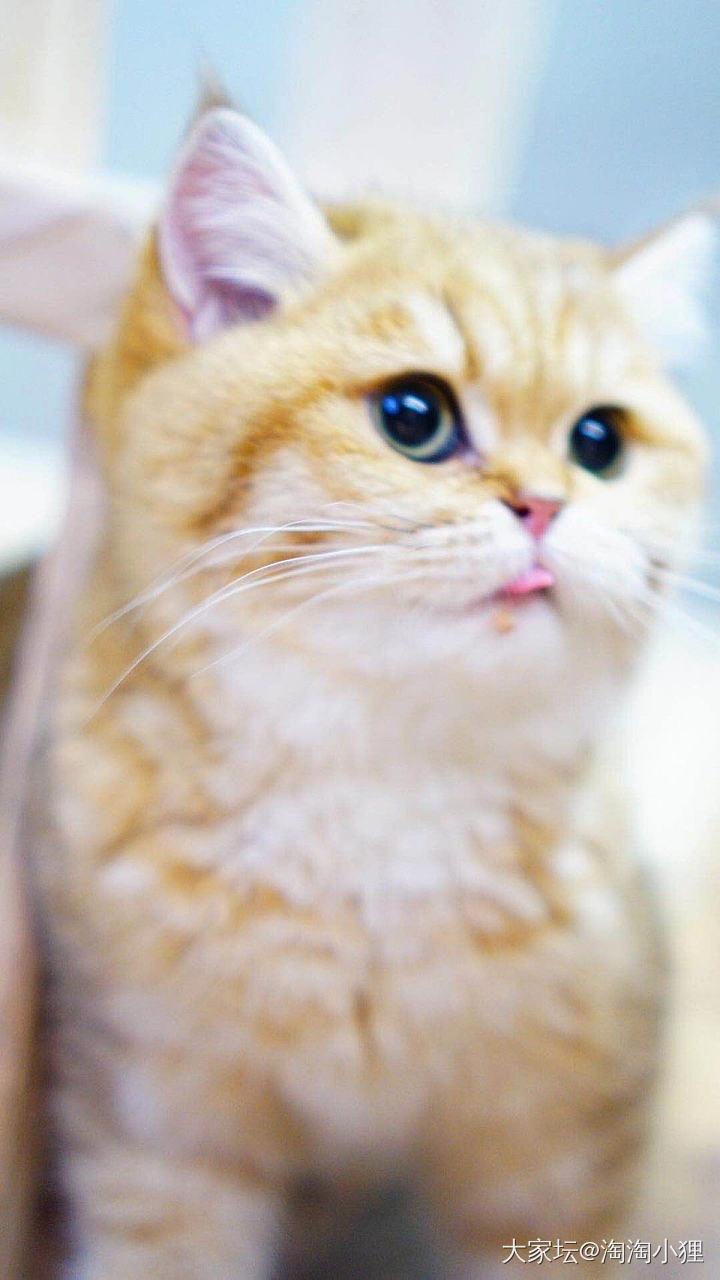 闲的无聊…再来凶大家一下下……_宠物猫
