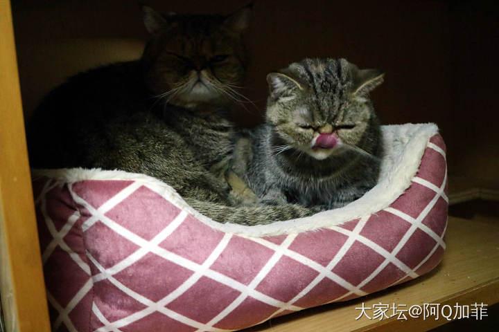 ET很享受_猫宠物大家谈