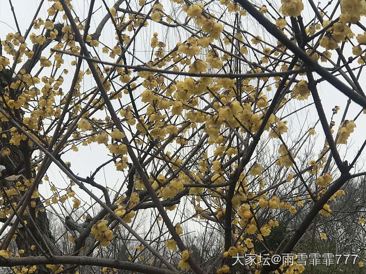 你在海南的艳阳里露着腰,我在扬州的雪花里裹着貂......           ..._旅游