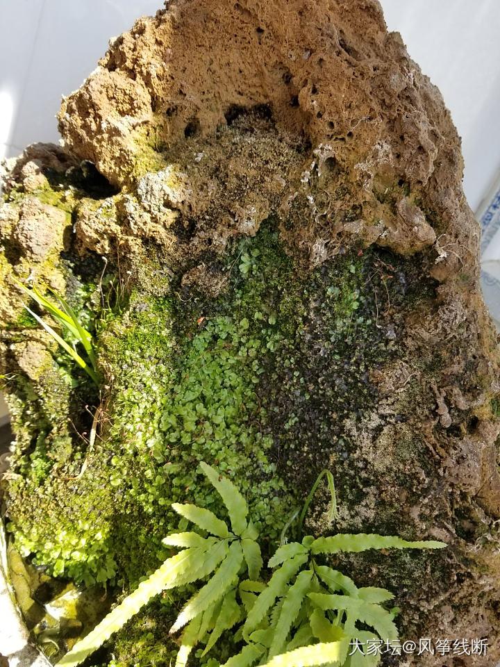 大家看看这是什么植物?_植物